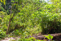 Plants In The Amazon Jungle Royalty Free Stock Photo