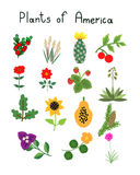 Plants of America Stock Image