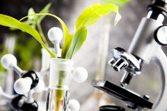 Free Plants And Laboratory Stock Photo - 15996600