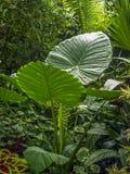 Plants in an arboretum in Queen Elizabeth Park. Vancouver B.C Stock Photos