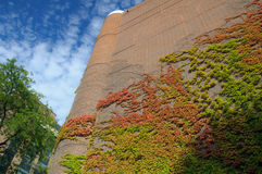Plants & Architecture. Colorful architectural detail in Downtown Chicago Illinois Stock Photos