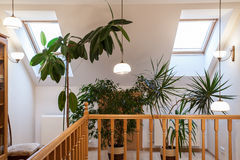 Plants on the attic. Flowers and plants on the corridor on attic stock photo