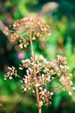 Plants in autumn Royalty Free Stock Photo