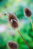 Plants in autumn Stock Photo