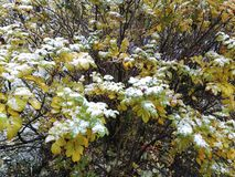 Plants. Autumn colorful plant in forest Stock Photography