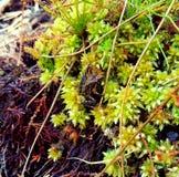 Plants. Baby bullfrog creek moss northwest Florida royalty free stock photo