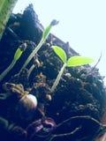 Plants Stock Photography