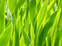Plants background. Royalty Free Stock Photography