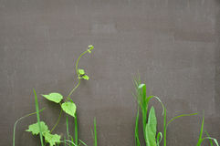 Plants on the background of metallic painted surface Royalty Free Stock Photo