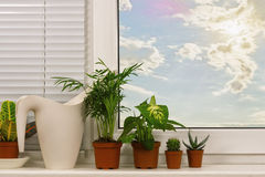 The plants in the background of the plastic box Stock Photo