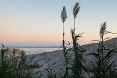 plants on the background of the sea Royalty Free Stock Photo