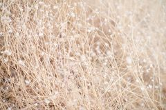 Plants background Royalty Free Stock Photography