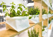 Plants bag shelves spice mint jute bags store.  Stock Image