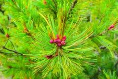 Plants Baikal taiga Stock Image