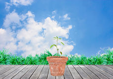 Plants in baked clay jardiniere and blue sky. Background Stock Image