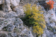 Plants in the Balkan Mountains Stock Photo