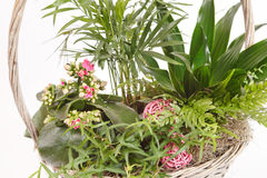 Plants in the basket Stock Image