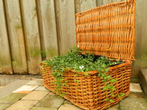 Plants in a basket Stock Photo