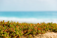 Plants on beach. Royalty Free Stock Photography
