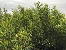 Plants on beach Royalty Free Stock Photos