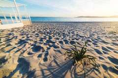 Plants on the beach at sunset Royalty Free Stock Photography
