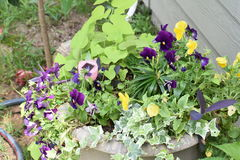 Plants. Beautiful flowers of all kinds can be used to decorate the porch patio or inside the house Stock Photos