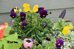 Plants. Beautiful flowers of all kinds can be used to decorate the porch patio or inside the house Stock Image