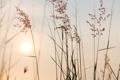 Plants with beautiful sunset Stock Images