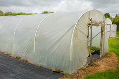 Plants being grown inside a polytunnel Stock Photos