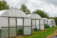 Plants being grown inside a polytunnel Stock Photo