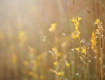 Plants bladderwort flowers . Beautiful plants bladderwort flowers colorful stock image