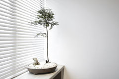 Plants in the blinds next Royalty Free Stock Photos