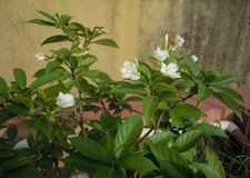 The plants with blossoming flowers with buds. royalty free stock photos