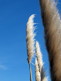 Plants blowing in the wind against blue sky Stock Image