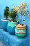 Plants at blue painted wall Royalty Free Stock Photo