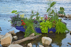 Plants in blue row boat Royalty Free Stock Photo