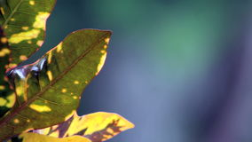Plants with blur background stock footage