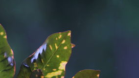 Plants with blur background Rain Scene stock footage