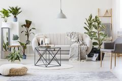 Plants in botanic living room. Pouf and grey armchair in botanic living room interior with beige sofa near plants and table on rug royalty free stock image