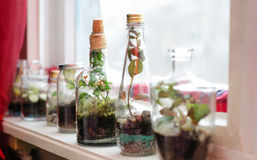 The plants in bottles. The green plants grow in bottles on the windowsill Stock Image