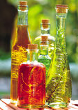 Plants in bottles of oil Stock Photos