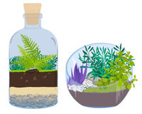Plants in bottles - Terrariums with tree Royalty Free Stock Image