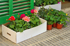 Plants in a box Royalty Free Stock Image