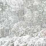 Plants and branches nature covered by snow. Winter background texture Stock Images