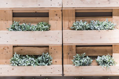 Plants in brown flower pot on wooden shelves Royalty Free Stock Photography