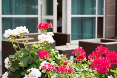 Plants and brown garden furniture on terrace of a hotel Royalty Free Stock Photos