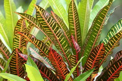 Plants in the canopy of the jungle Royalty Free Stock Photography