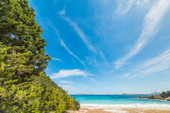 Plants in Capriccioli beach Royalty Free Stock Photography