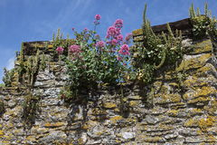 Plants on a castle wall Stock Photo