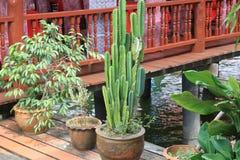 Plants in ceramic Stock Photos